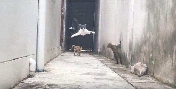 絶体絶命の大ピンチ!追い込まれた猫 忍者のような脱出劇が話題に