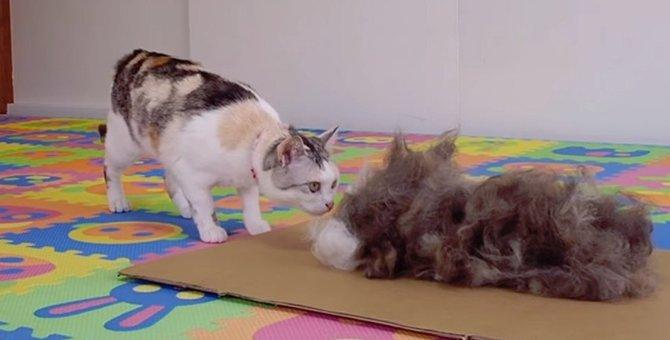猫ちゃんの抜け毛で分身を作る