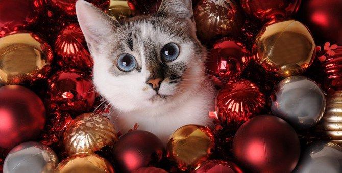 クリスマスまであと何日?ポール&ジョーボーテの猫のアドベントカレンダーが可愛すぎる!