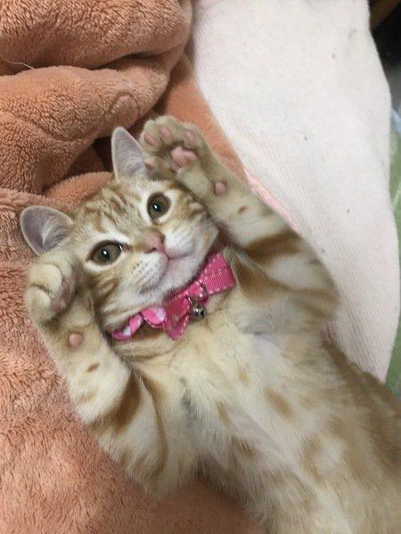 猫はどうしてグーパーするの?8つの気持ち