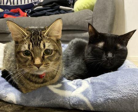 猫が「はまり」がちな場所3つ
