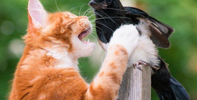 猫の天敵と言われている動物9選