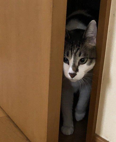 猫を飼うには必須!脱走防止対策を練ろう