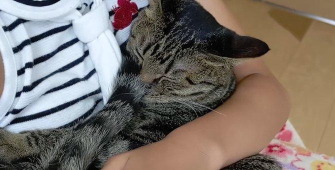 抱っこで赤ちゃんに戻っちゃう猫ちゃん