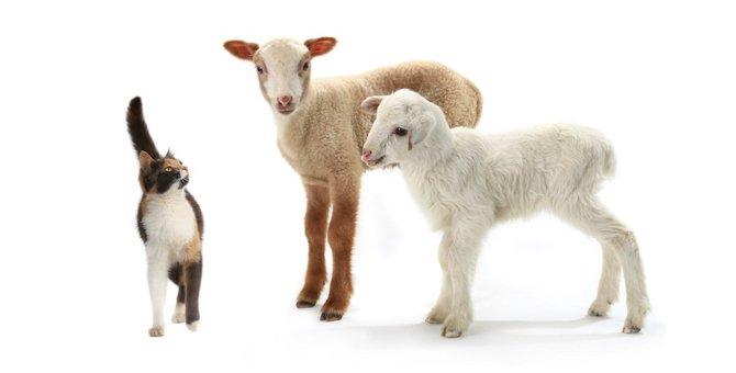 羊毛フェルトで猫を作りたい!初心者でもできるおすすめキット5選