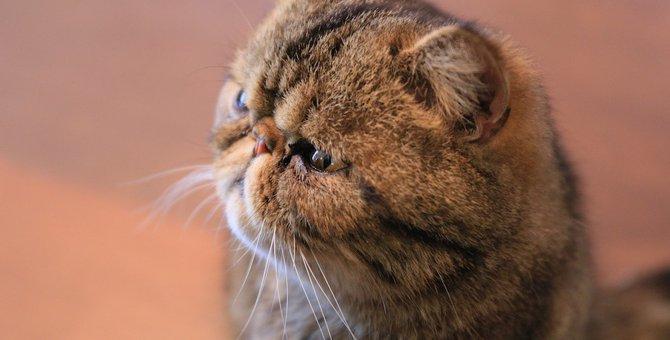 """猫に""""鼻くそ""""がつく原因と考えられる病気"""
