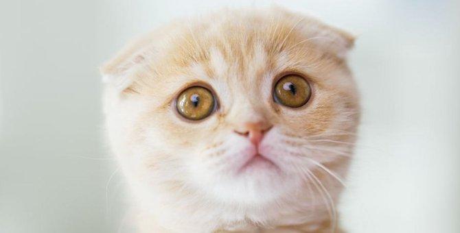 猫が悲しみを感じている時に見せる仕草5選