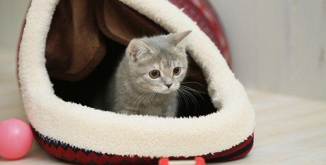 猫ドームの特徴や選び方、入ってくれない理由