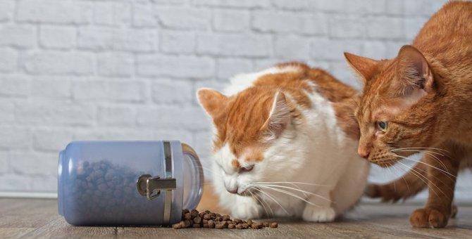 キャットフードは猫の健康を考えて選ぼう!選び方やおすすめ商品も