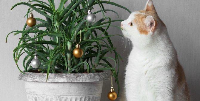 猫にアロエは大丈夫?食べさせたり塗ったりしても平気なの?