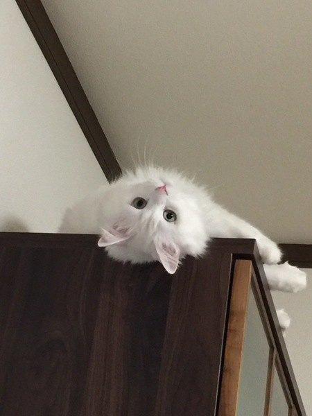 猫が上から飼い主を見下ろす心理5つ