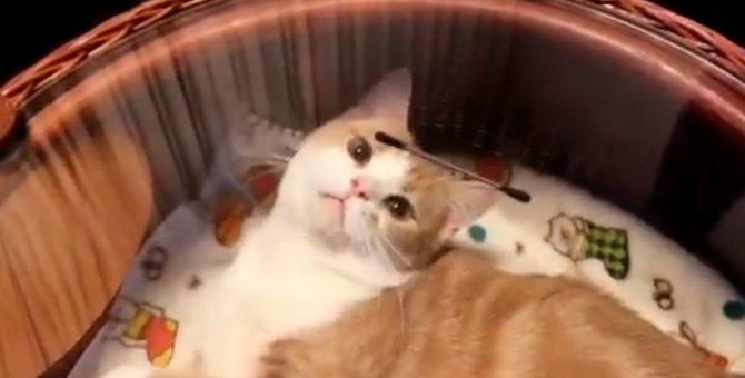 【話題】「取れない!」ガラスに気付かず必死な猫さんが可愛すぎる問題!
