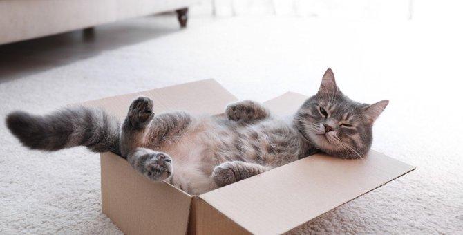 猫を飼うと『不幸になる』人の特徴5選