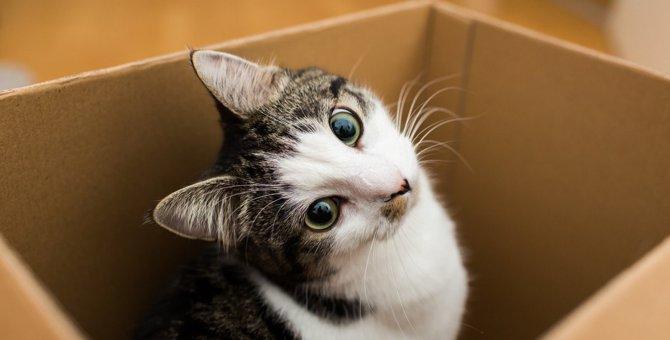 猫が『段ボール』の虜になってしまう理由4つ
