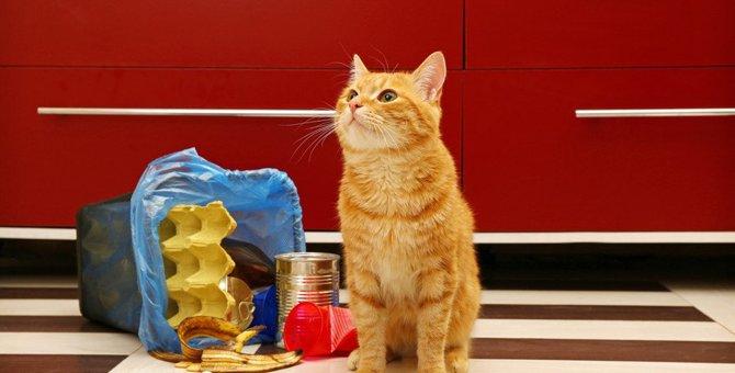 猫がごみ箱を漁るのはなぜ?3つの理由と対処法