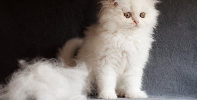 猫の抜け毛が多い時の対処法6つと便利な商品