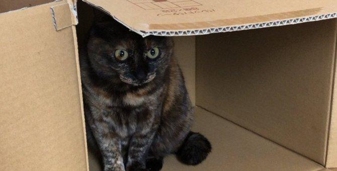 猫が思わず『入りたくなるもの』ランキングTOP3!本能をくすぐられるアイテムとは?