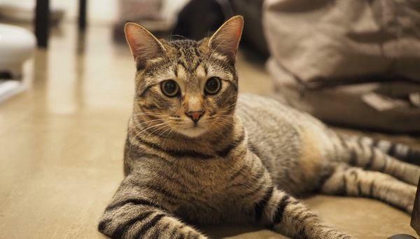 猫が大好きな人に見られる5つの共通点