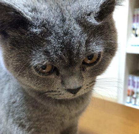 猫が『不機嫌』になってしまう理由5選!機嫌が悪い時、猫はどんな仕草をするの?
