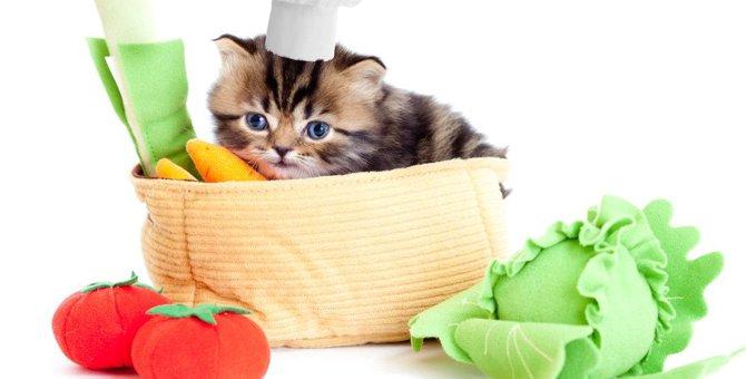 猫の免疫力をアップする3つの食材!必要な栄養素とは?