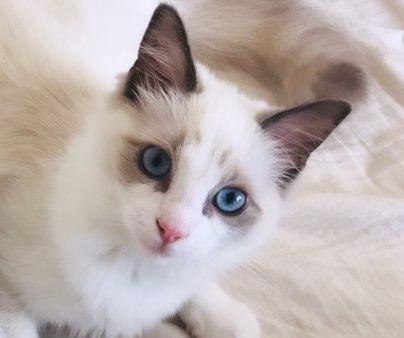 子猫用と成猫用のご飯に違いはある?2つの違い