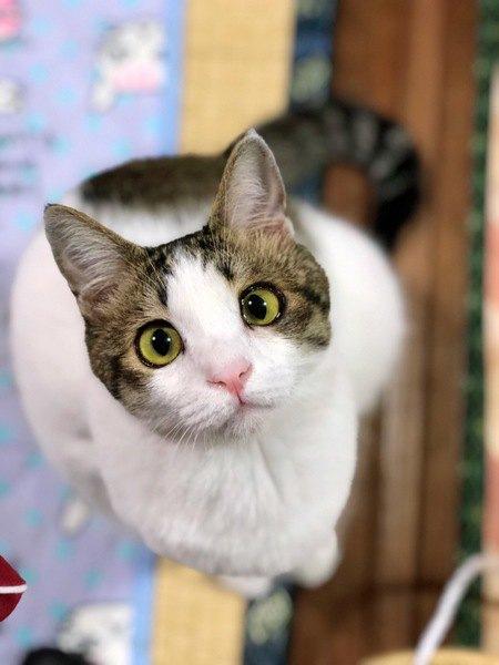 猫が『撫でられたい!』と思っている時にする仕草や行動5つ