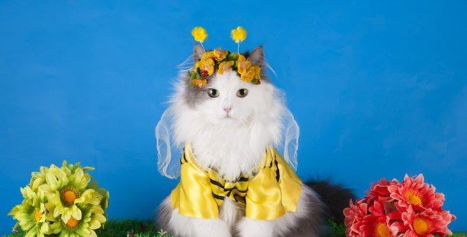 蜂に刺された猫はどうなるの?その時の対処法とは