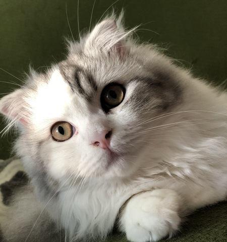 「聞こえませ〜ん」飼い主を無視する猫への対処法5つ