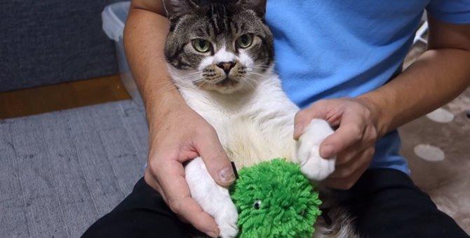 緑のあの子が猫ちゃんの物件探しをお手伝い♪