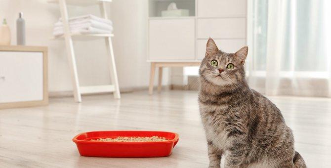 猫トイレで注意すべき『湿気トラブル』とは?ケース別に6つの対策を紹介!