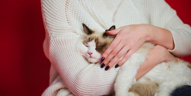 『抱っこ』を好む猫の種類5選