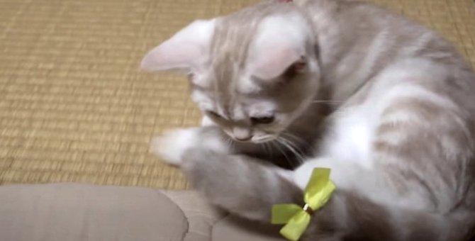 リボンが可愛い!猫ちゃんのおめかし♪