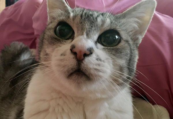 長生きしてくれる猫の種類や柄6つ