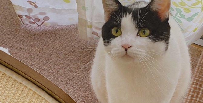 何を考えているのかわからない…猫の『心情』を知る方法3つ