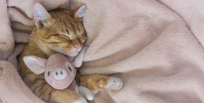 平均睡眠時間は12~16時間!あなたの愛猫はちゃんと寝れてる?