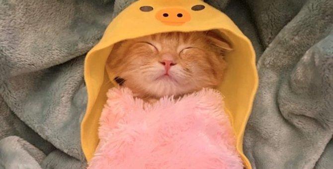 【大人気】尊いの極み…!小鳥に変身したマンチカン子猫がキュート過ぎる件