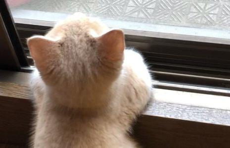 猫は後頭部だけでも可愛い!ねこを後ろから愛でる写真集