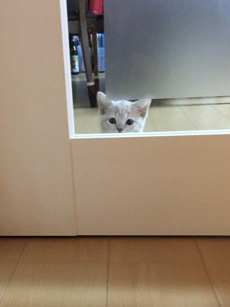 猫による通せんぼ!ドアの前で寝ちゃうのはなぜ?5つの理由
