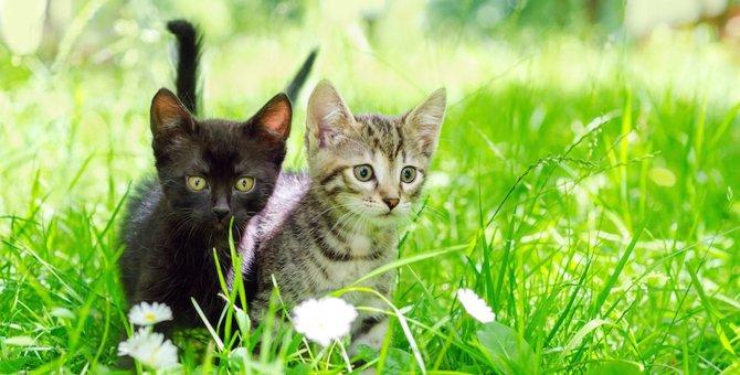 お酒を買えば猫が助かる!?日本酒「猫花見月」と「苹果猫」を紹介