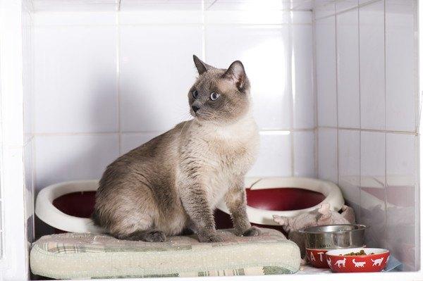 猫の長期預かりサービスの特徴や選び方、おすすめのホームまで