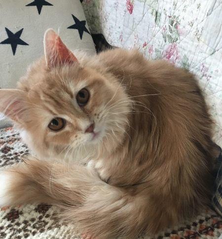 洋服についた猫の毛をうまく取る4つの方法