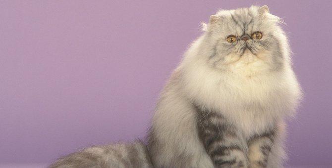『ぺちゃ鼻の猫』に起こりやすいトラブル4選と予防策