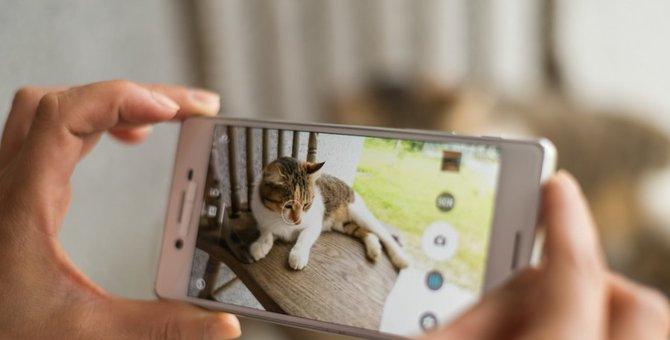 迷子猫を探すツール「ドコノコ」を知っていますか?