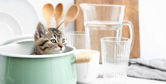 猫が『邪魔』したくなること3つと対処法