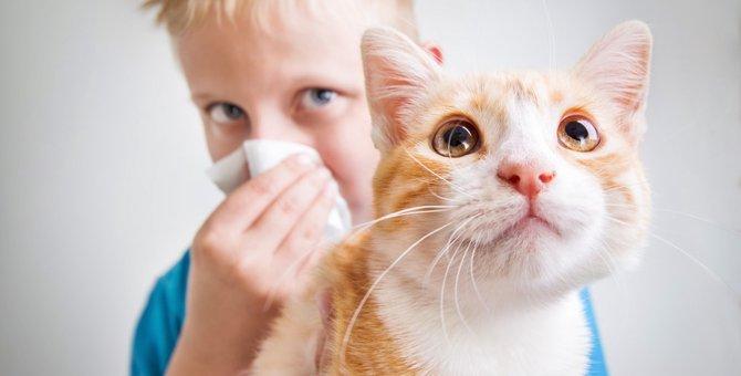 猫の臭いの原因3つとその対策