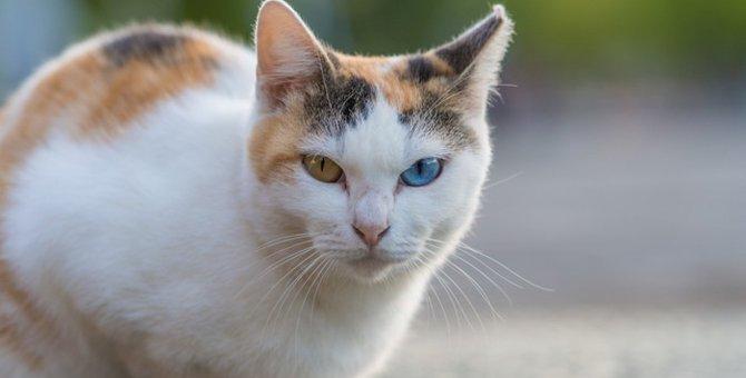 猫の目の仕組みやそこからわかる気持ちについて
