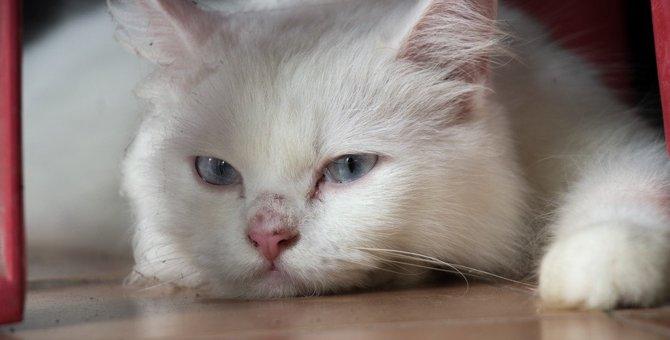 猫の気持ちが遠ざかる飼い主の残念な行為5つ