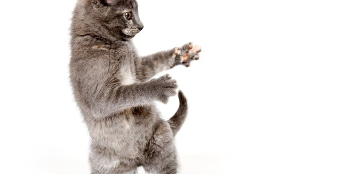 猫のダンスが可愛い!クネクネ踊る動画
