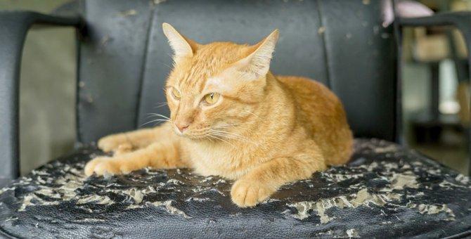 猫がソファで爪とぎをする理由と気持ち、対処法