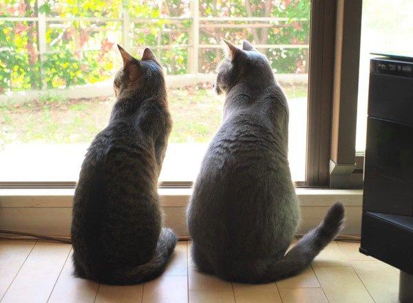 猫が『最高に幸せ』と感じる5つの飼い方